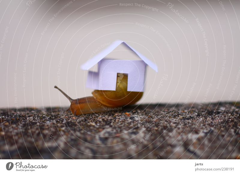 snail shell House (Residential Structure) Detached house Animal Wild animal Snail 1 Carrying Living or residing Life Colour photo Exterior shot Close-up