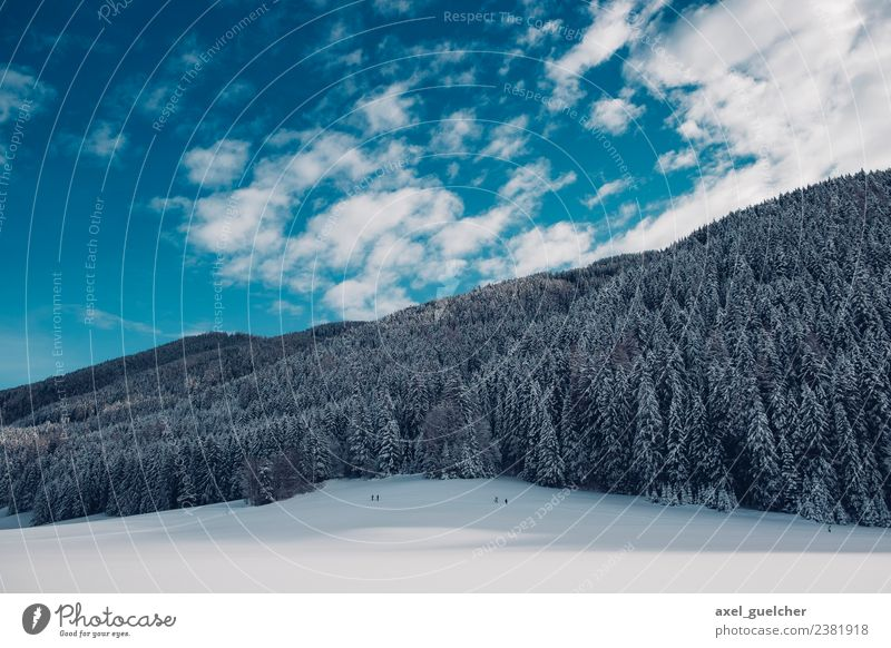 White Woods Nature Landscape Plant Sky Clouds Winter Beautiful weather Ice Frost Forest Hill Snowcapped peak Power Hope Adventure Relaxation Experience