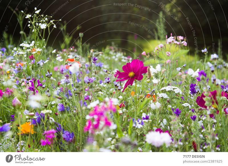 flower room Environment Nature Plant Spring Summer Climate Climate change Flower Wild plant Garden Meadow Field Climate protection Carbon dioxide CO2 emission