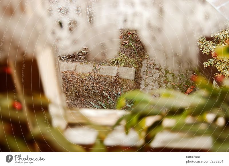Plant Window Cold Emotions Garden Moody Observe Curtain Spy View from a window Window frame Pot plant Protection Garden path