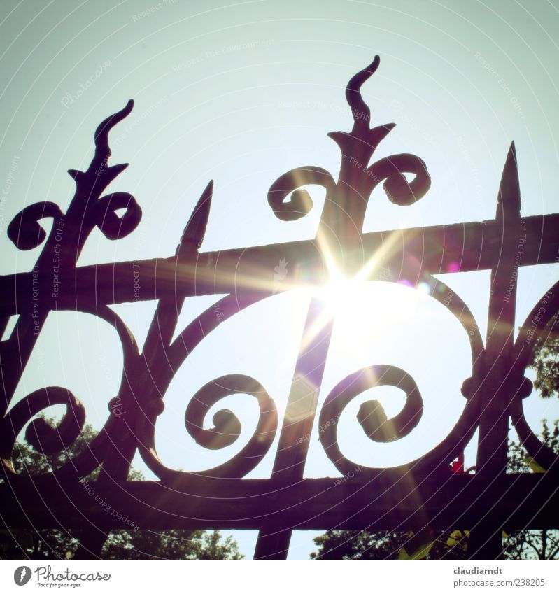 Mainly sunny... Cloudless sky Sun Summer Beautiful weather Tree Garden Illuminate Hot Bright Warmth Fence Wrought ironwork Metal Metalware Glare effect