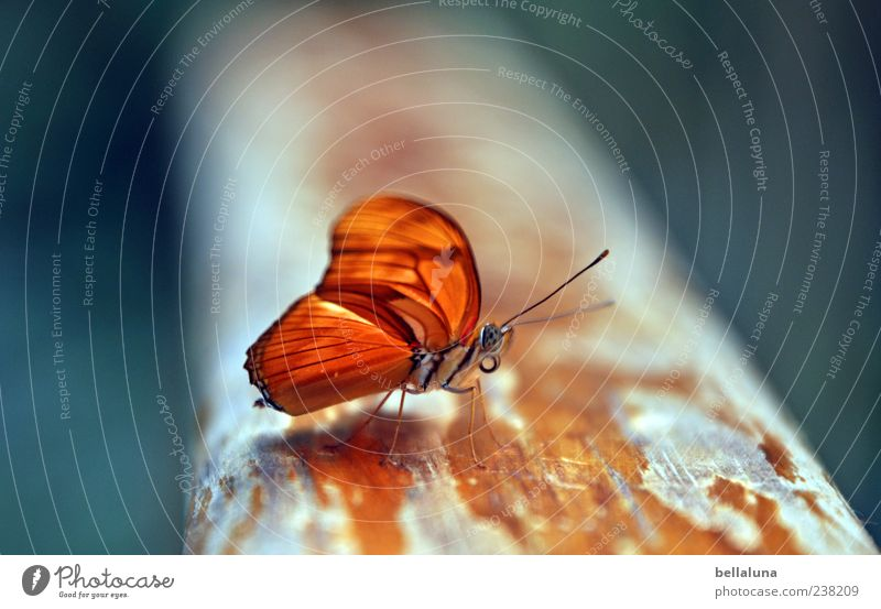 orange Nature Animal Summer Beautiful weather Wild animal Butterfly Wing 1 Sit Esthetic Exceptional Simple Elegant Exotic Fantastic Free Uniqueness Near Natural
