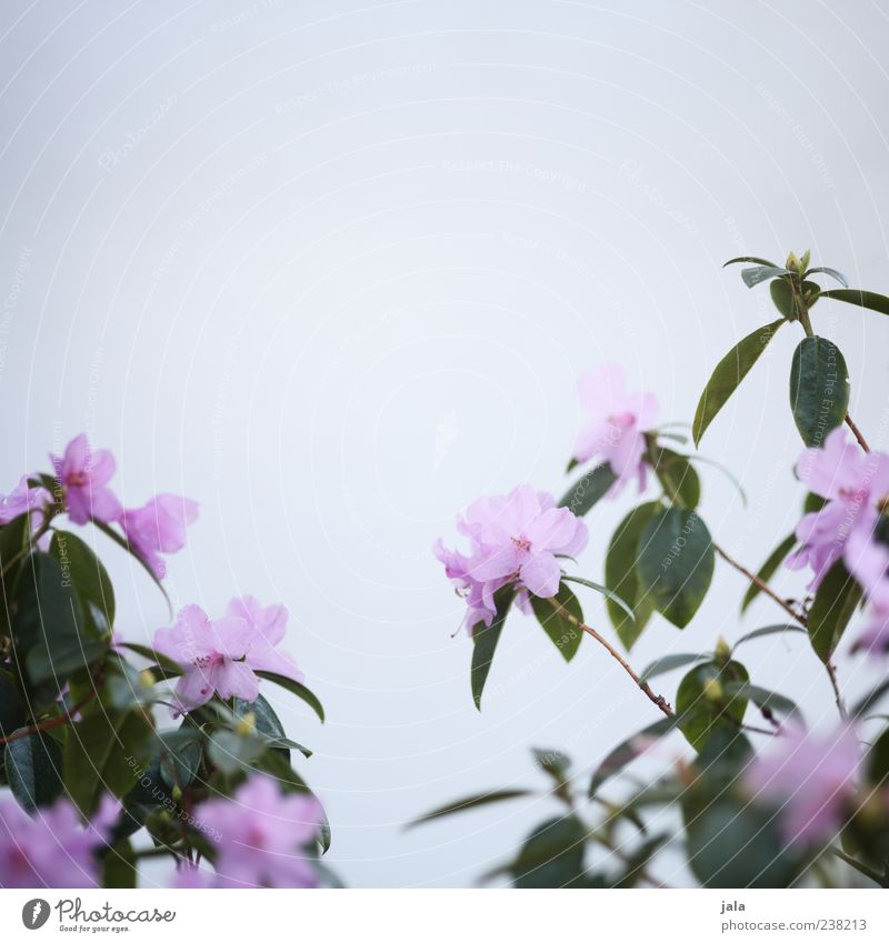 Beautiful Plant Flower Leaf Blossom Facade Growth Bushes Gloomy Violet