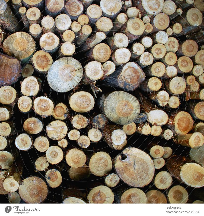 Raw wood with different resistance tree Collection Lie natural Brown Orderliness Arrangement Pure Stack Tree trunk Raw materials and fuels Wood grain Part