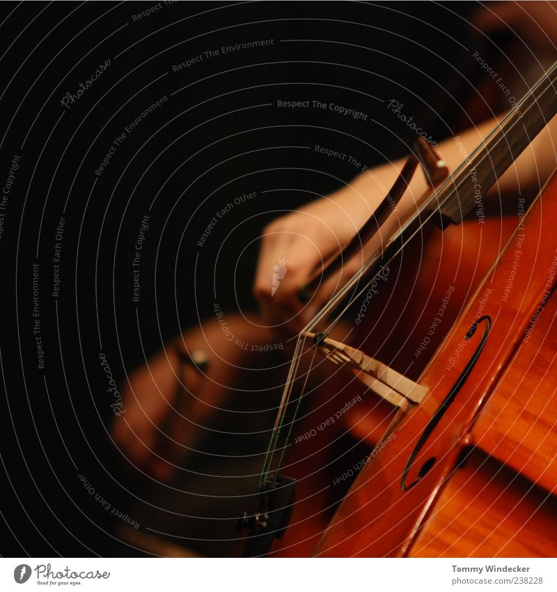 Hand Movement Art Music Painting (action, work) Creativity Concert Passion Musical instrument Artist Sound Musician Musical instrument string Classical Orchestra Make music