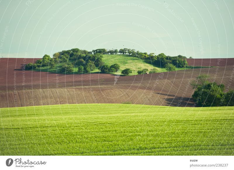 oasis Island Agriculture Forestry Environment Nature Landscape Elements Earth Sky Cloudless sky Horizon Summer Climate Beautiful weather Tree Grass Bushes