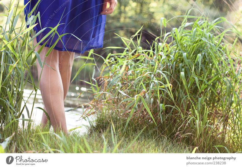 blau machen Feminine Young woman Youth (Young adults) Woman Adults Legs 1 Human being 18 - 30 years Water Sun Summer Grass Bushes Wild plant River bank Dress