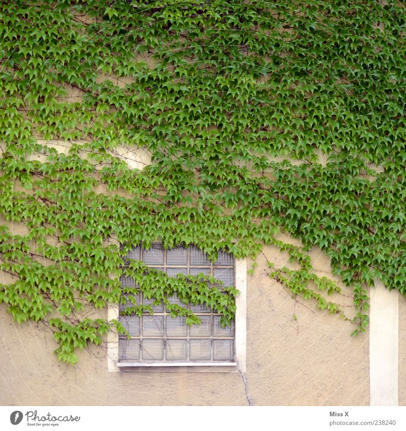 Green Plant Leaf House (Residential Structure) Window Wall (building) Wall (barrier) Facade Growth Bushes Ivy Tendril Glass block