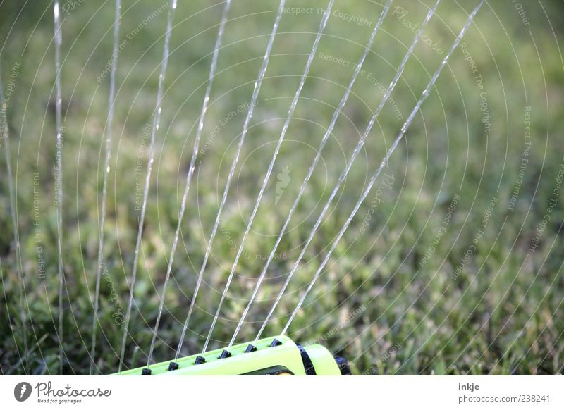 Water Summer Meadow Spring Grass Wet Beautiful weather Cast Drought Jet of water Blow up Splash of water Lawn sprinkler