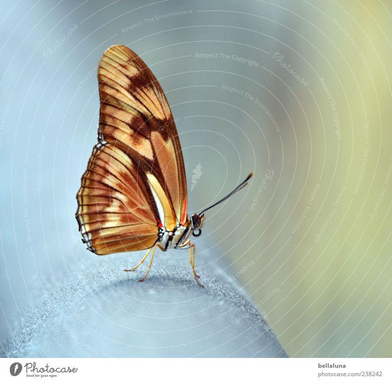 Nature Beautiful Summer Animal Gray Metal Brown Orange Wild animal Exceptional Elegant Sit Natural Free Esthetic Authentic