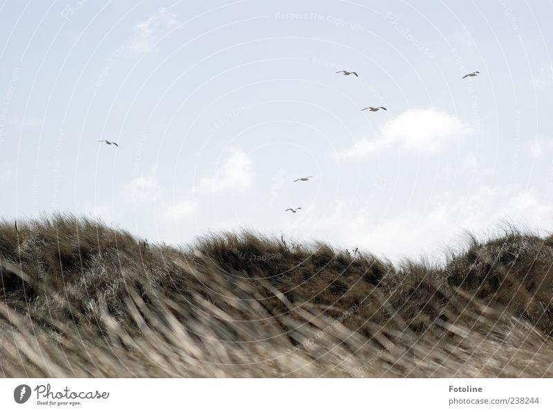 Spiekeroog | Birds about Spiekeroog Environment Nature Landscape Plant Animal Sky Clouds Wind Grass Coast Beach North Sea Island Wild animal Flock Bright