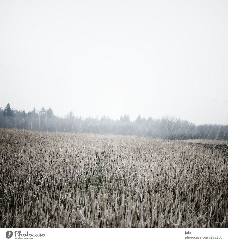 field Nature Landscape Plant Sky Winter Bad weather Fog Tree Grass Field Forest Cold Gloomy Colour photo Subdued colour Exterior shot Deserted Copy Space top