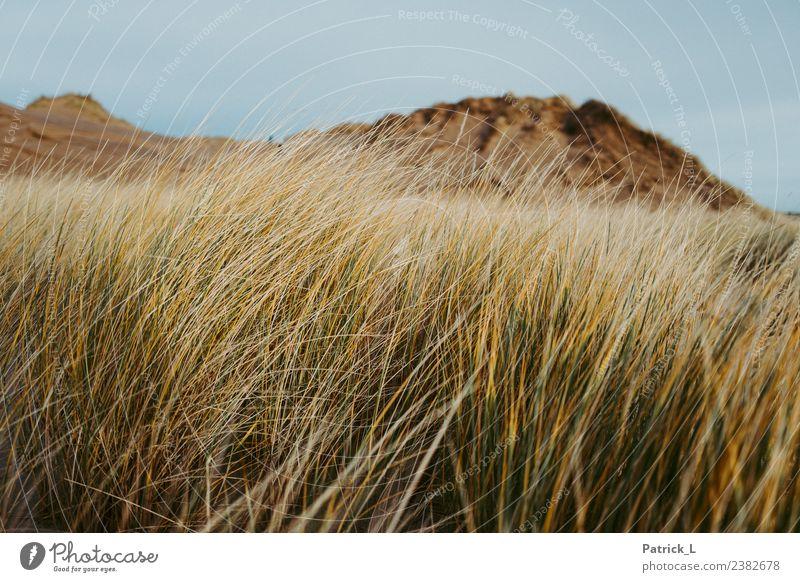favourite dune Nature Landscape Plant Earth Grass Bushes Coast Beach Baltic Sea Dune Skagen Denmark Yellow Gold Green Safety (feeling of) Calm Sand Sky Wind