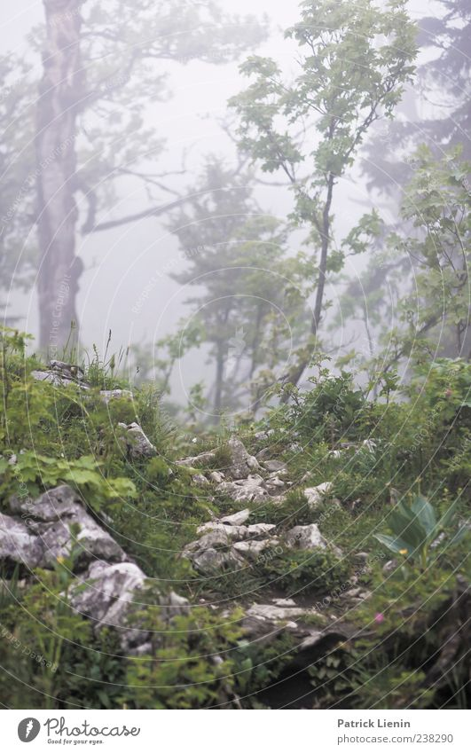 fairytale world Environment Nature Landscape Plant Elements Climate Weather Bad weather Wind Fog Tree Flower Virgin forest Hill Rock Mountain Wet Wild Moody