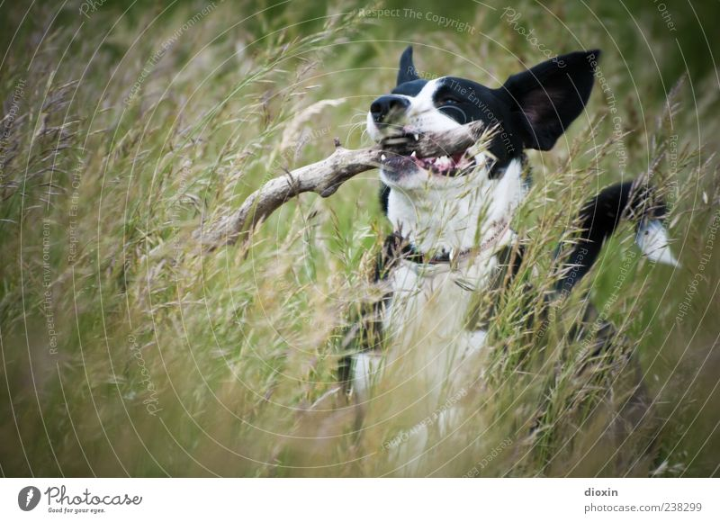 grasshopper Environment Nature Landscape Plant Grass Stick Branch Meadow Dog Animal face Pelt 1 Walking Running Playing Jump Happiness Natural Wild Joy