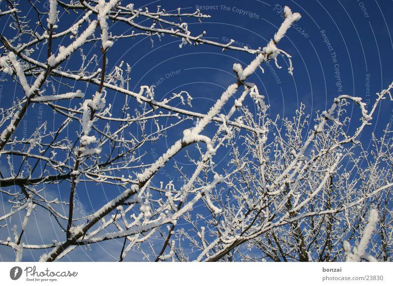 Sky Tree Blue Winter Snow Ice Twig