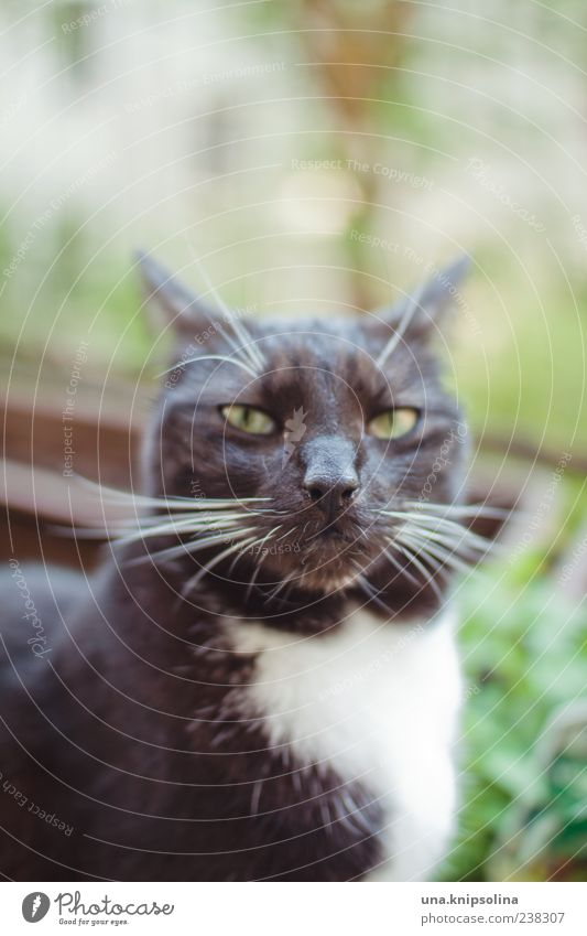 you talking to me? Animal Pet Cat 1 Observe Aggression Brash Cold Crazy Anger Black Emotions Whisker Sunlight Copy Space top Domestic cat Colour photo
