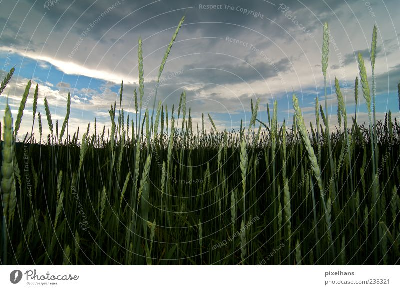 Sky Nature Blue White Green Plant Summer Clouds Environment Landscape Gray Brown Weather Field Agriculture Storm