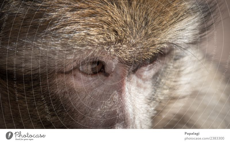 watching you... Animal Wild animal Animal face Pelt Monkeys 1 Observe Looking Esthetic Natural Willpower Brave Trust Loyal Friendship Love of animals Beautiful
