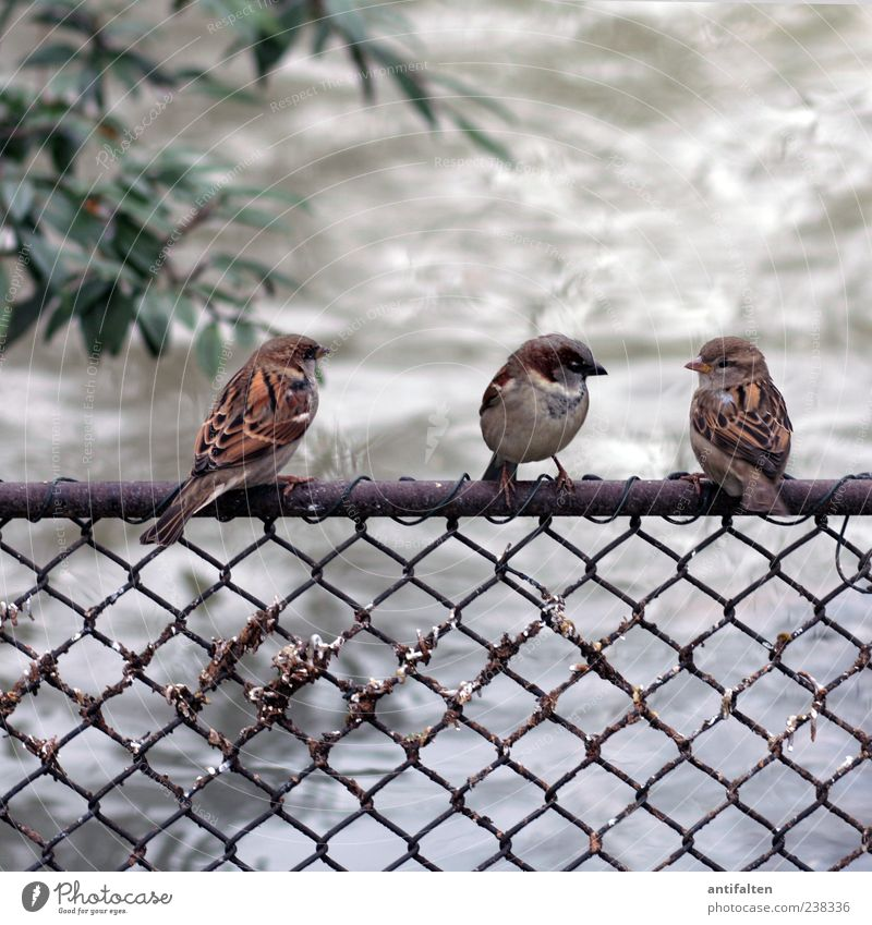 Water Green Leaf Animal Gray Small Bird Brown Sit Group of animals Wing Animal face Fence Sparrow Perspective Side by side