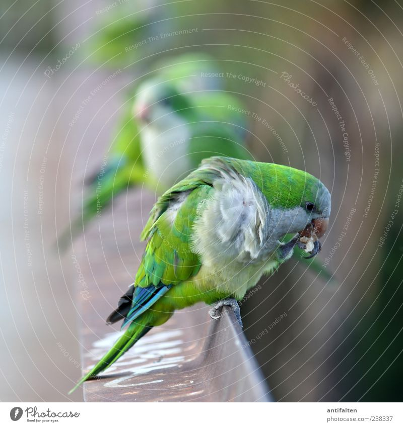 Green Animal Eyes Bird Wild animal Free Group of animals Wing Feather Cleaning Handrail Animal face Zoo Steel Beak Claw