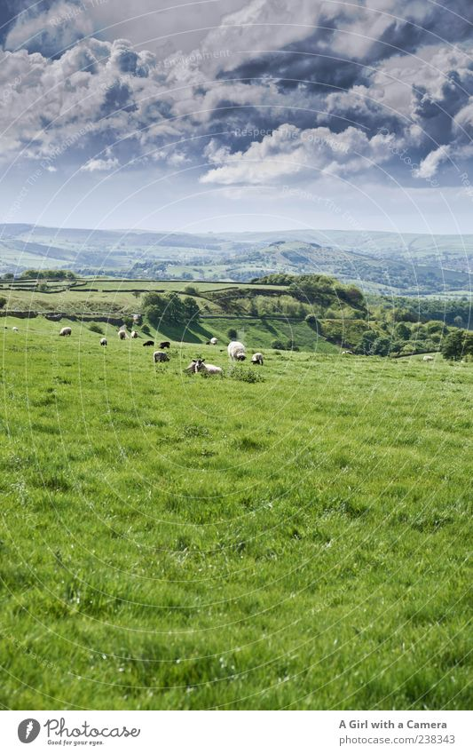 all things green and beautiful Nature Landscape Sky Clouds Storm clouds Spring Weather Grass Hill Exceptional Natural Gray Green Horizon Derbyshire England