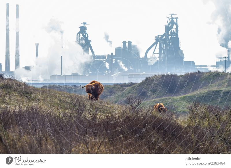 advance Advancement Future Industry Environment Nature Landscape Climate Climate change Cold Strong Blue Brown Subdued colour Exterior shot Morning Day