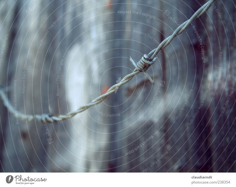 frontier Wood Metal Protection Wooden wall Wire Barbed wire Border Protective Boundary Guard Colour photo Exterior shot Detail Deserted Copy Space top