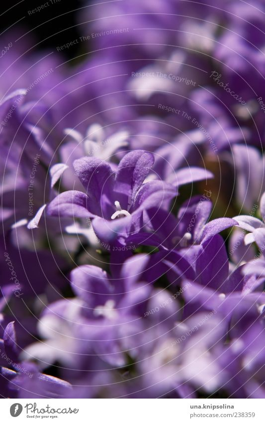 violet Environment Nature Plant Flower Blossom Blossoming Natural Violet Central perspective Blossom leave Colour photo Close-up Detail Macro (Extreme close-up)