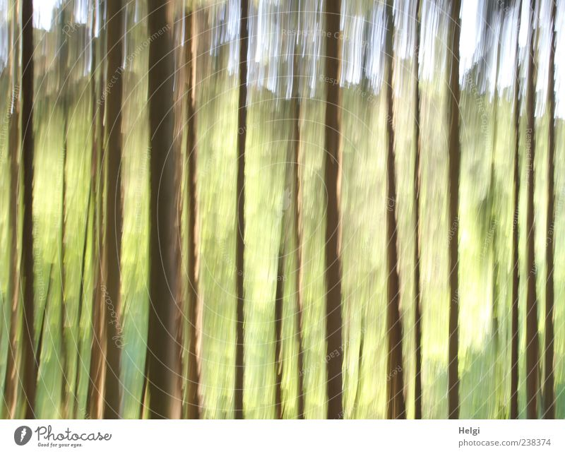 Sky Nature Green Tree Plant Forest Environment Landscape Yellow Spring Movement Art Brown Exceptional Natural Fresh