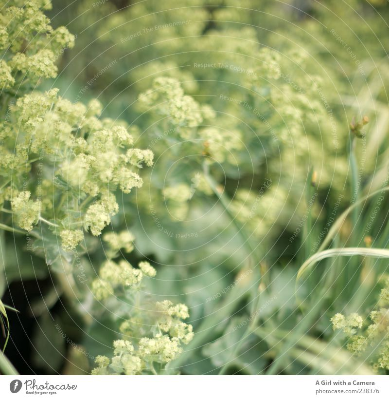 execrate sb./sth. Elegant Style Decoration Nature Plant Spring Flower Grass Blossoming Growth Green Subdued colour Exterior shot Deserted Shallow depth of field