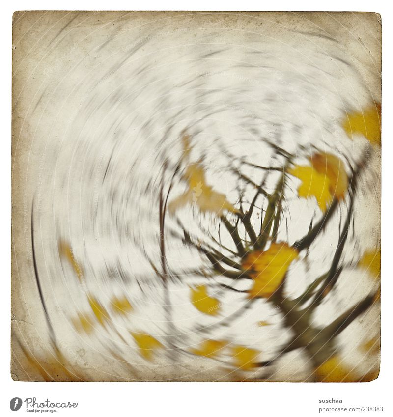 happy 200 for bella ... Environment Nature Air Sky Autumn Climate Weather Wind Gale Tree Yellow Branch Leaf Rotate Colour photo Subdued colour Experimental