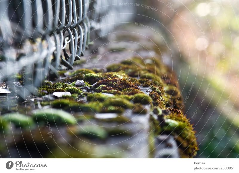 Nature Green Plant Environment Natural Fence Moss Foliage plant Overgrown Wild plant Garden fence Wire netting fence Growing wild