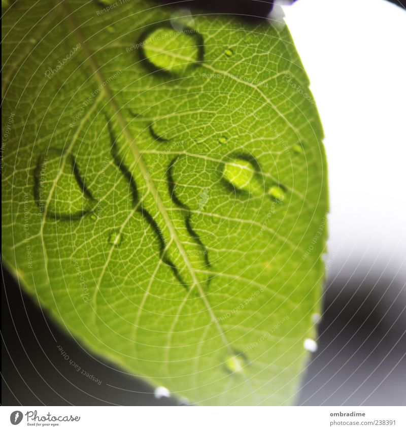Nature Green Beautiful Plant Summer Leaf Environment Spring Rain Wet Drops of water Foliage plant Rachis Water Leaf green Macro (Extreme close-up)