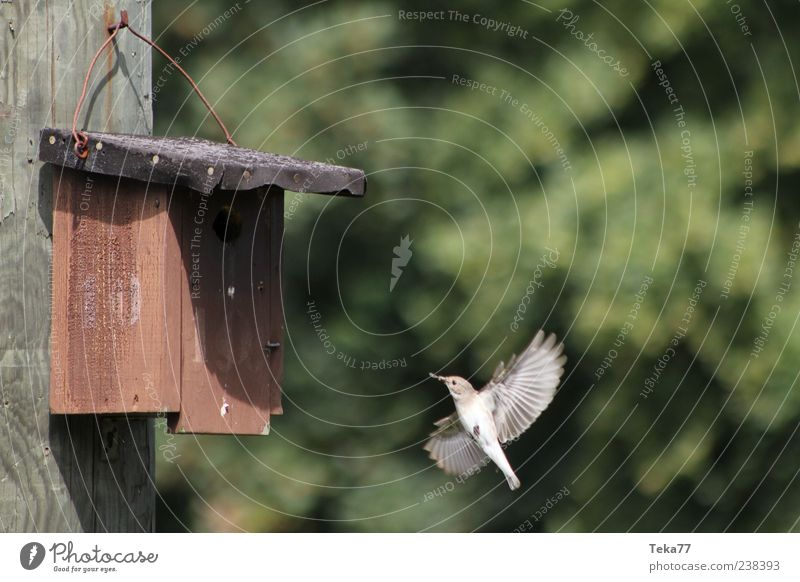 feeding time Environment Nature Spring Animal Bird 1 Movement Feeding Esthetic Authentic Exceptional Colour photo Exterior shot Deserted Birdhouse Wing Beak