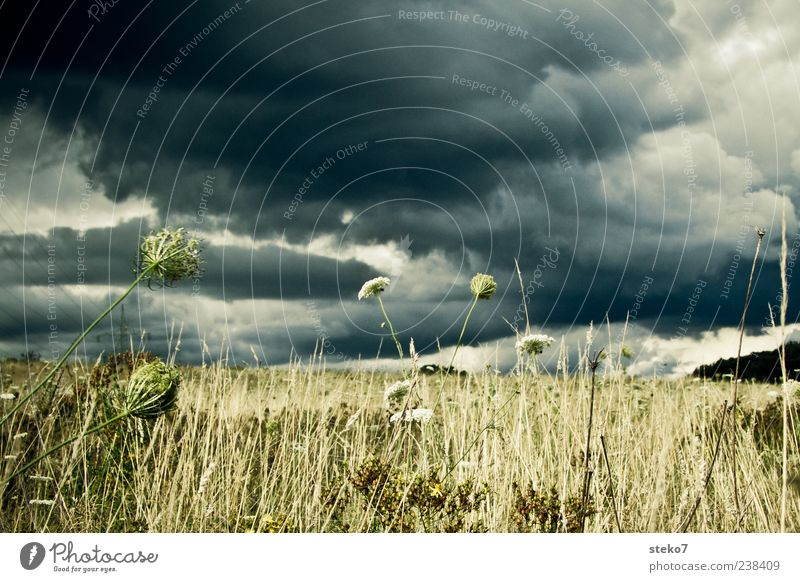 against the rain Landscape Sky Storm clouds Grass Foliage plant Field Dry Gray Green Apocalyptic sentiment Calm Gale Exterior shot Deserted Day Gray clouds