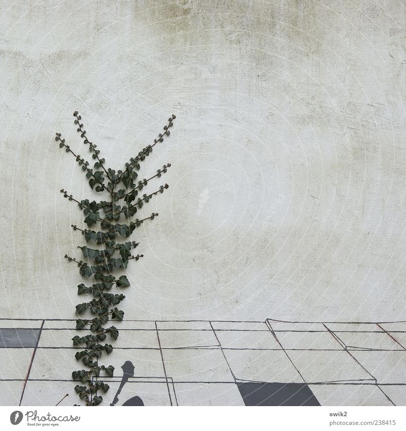 growth pact Plant Leaf Foliage plant Wild plant Tendril Ivy Wall (barrier) Wall (building) Facade Rendered facade Growth Sharp-edged Simple Bright Natural Gray