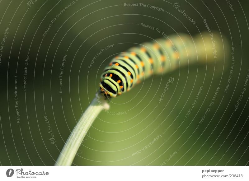 from nowhere Summer Nature Plant Grass Animal Farm animal Animal face 1 Line Stripe Crawl Fat Green Caterpillar Colour photo Exterior shot Close-up Detail