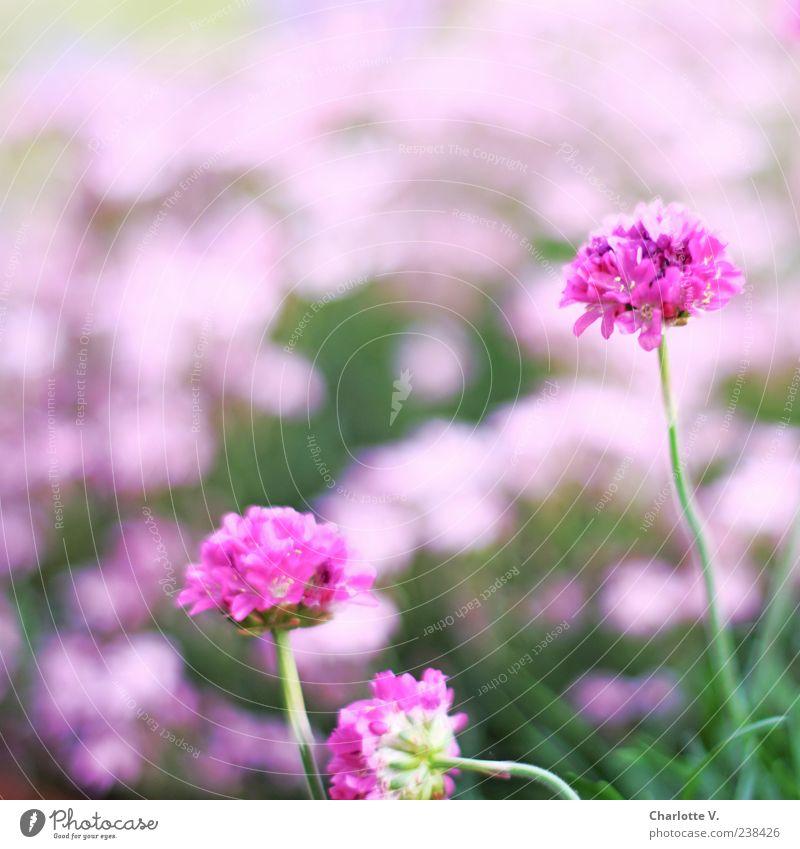 Nature Green Beautiful Plant Flower Colour Calm Spring Blossom Pink Elegant Natural Esthetic Simple Blossom leave Spring fever