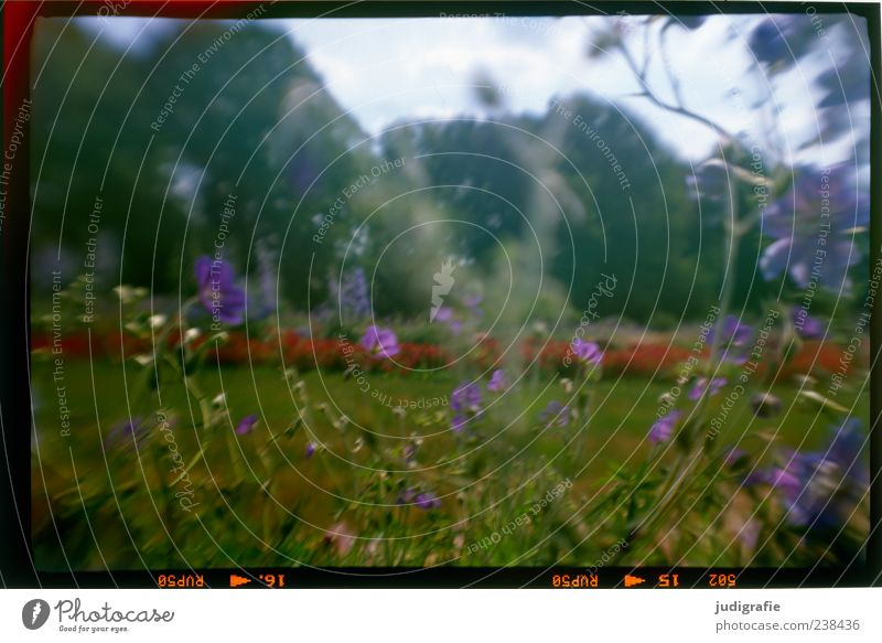 in the park Environment Nature Plant Summer Flower Grass Garden Park Meadow Blossoming Growth Moody Colour photo Exterior shot Deserted Day Blur