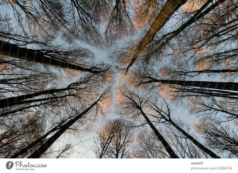 Trees rising towards the sky in the deciduous forest Environment Nature Landscape Plant Spring Forest Brown Spring fever Mixed forest Deciduous forest