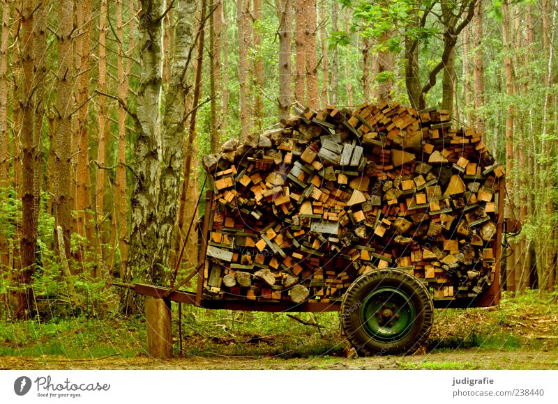 1500 A lot of wood. Environment Nature Landscape Plant Tree Forest Trailer Many Fuel Wood Wooden board Carriage Stack Collection Firewood Colour photo