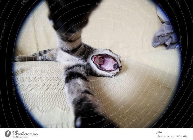 Cat Animal Open Exceptional Lie Round Animal face Whimsical Pet Paw Fisheye Embrace Muzzle Yawn Land-based carnivore Animal foot