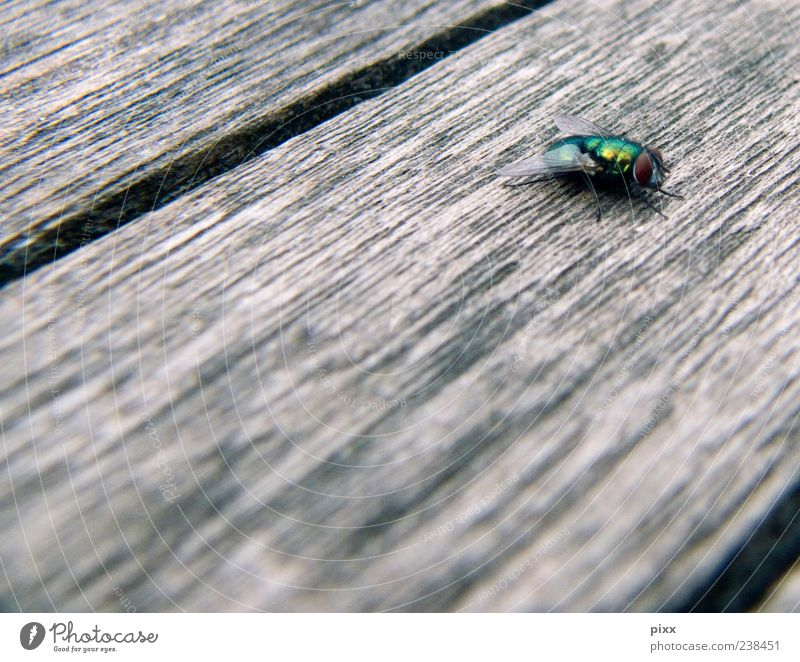 puck Animal Fly Wing 1 Flying Going Hunting Walking Sit Wait Authentic Exceptional Crazy Brown Gold Green Patient Calm Life Timidity Serene Break Perspective