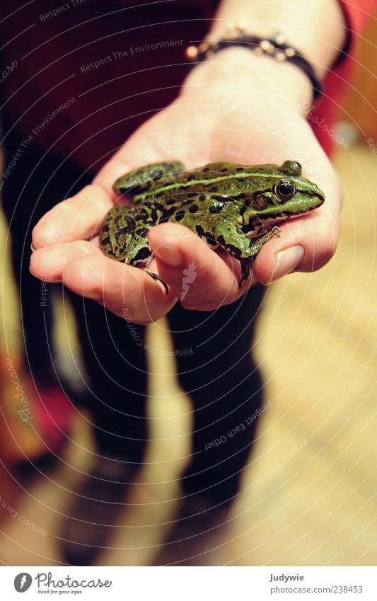 Nature Hand Green Animal Wild animal Natural Wet Fingers Observe Stop To hold on Discover Damp Indicate Frog Fairy tale