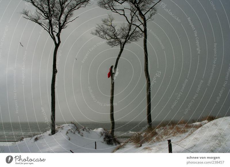 on winter days Snow Coast Baltic Sea Tree Sand Beach Darss Wind Bird Seagull Gray Sky Snowflake Rain Dark Fog Covered Ocean Far-off places Horizon Winter