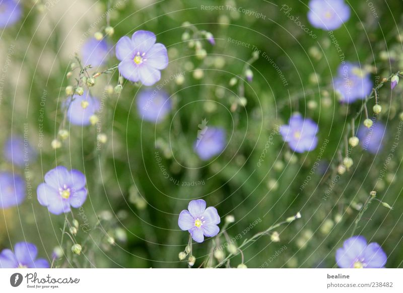 Nature Plant Blue Green Beautiful Flower Calm Life Blossom Spring Meadow Natural Small Garden Happiness Simple