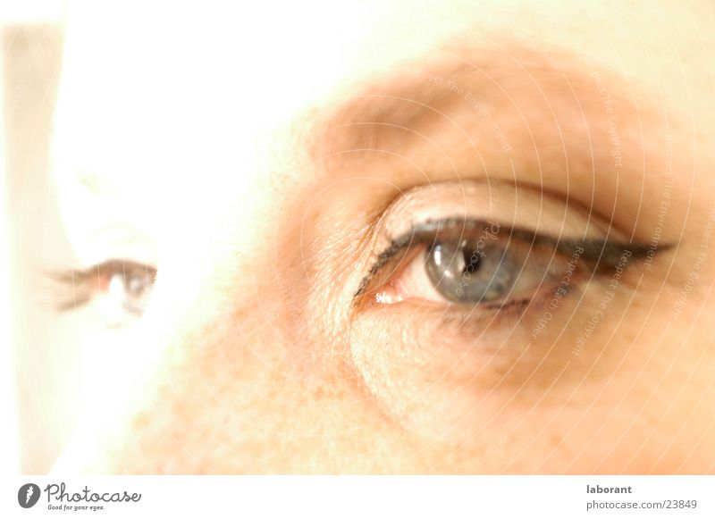 Woman Face Eyes Make-up Freckles Eyelash Eyebrow Overexposure Iris