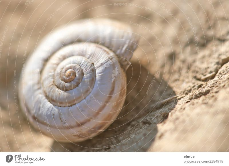 snail shell Nature Snail shell calcareous shell Whorl Spiral @ Old Authentic Historic Round Safety Protection Popular belief Senior citizen Esthetic Bizarre
