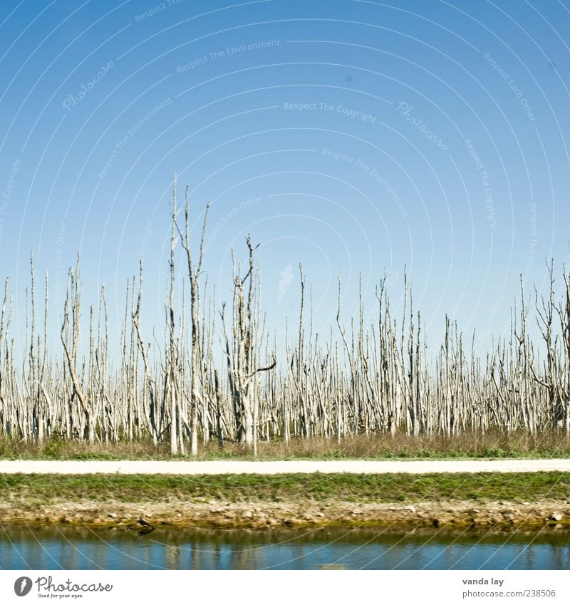 Water Tree Plant Environment Wood Grass Lanes & trails Transience USA River Beautiful weather Decline Tree trunk Symmetry Blue sky Thirst